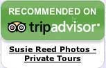 TripAdvisor Susie Reed Photos 5-Star Review